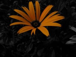 unbekannte Blume