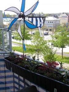 Die Blumen waren frich gepflanzt und alles grünte um uns herum - da ist so ein Balkon schon was Schönes!