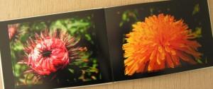Das Fotobuch von innen