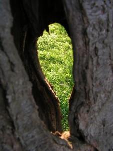 Gras durch ein Loch in einem Baum fotografiert