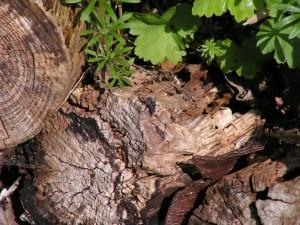 verrottendes Holz mit Fliege